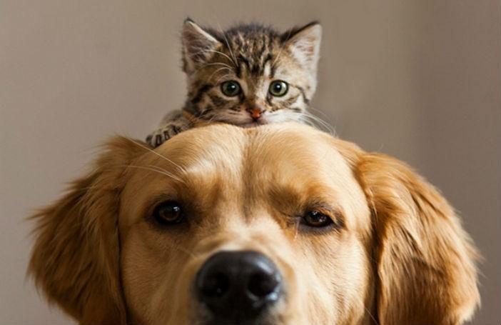 Kitten on top of Dog's Head